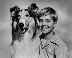 "Publicity photo for the tv show ""Lassie""  showing the actor who played Timmy and the dog who played Lassie"