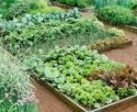 planting beds with green plants