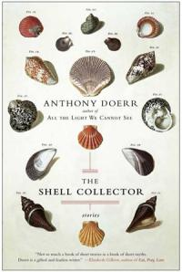 An artistic arrangment of sixteen shells, each a different shape and color