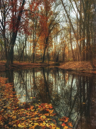 Deciduous forest with fallen leaves in autumn with a creek running through the middle.
