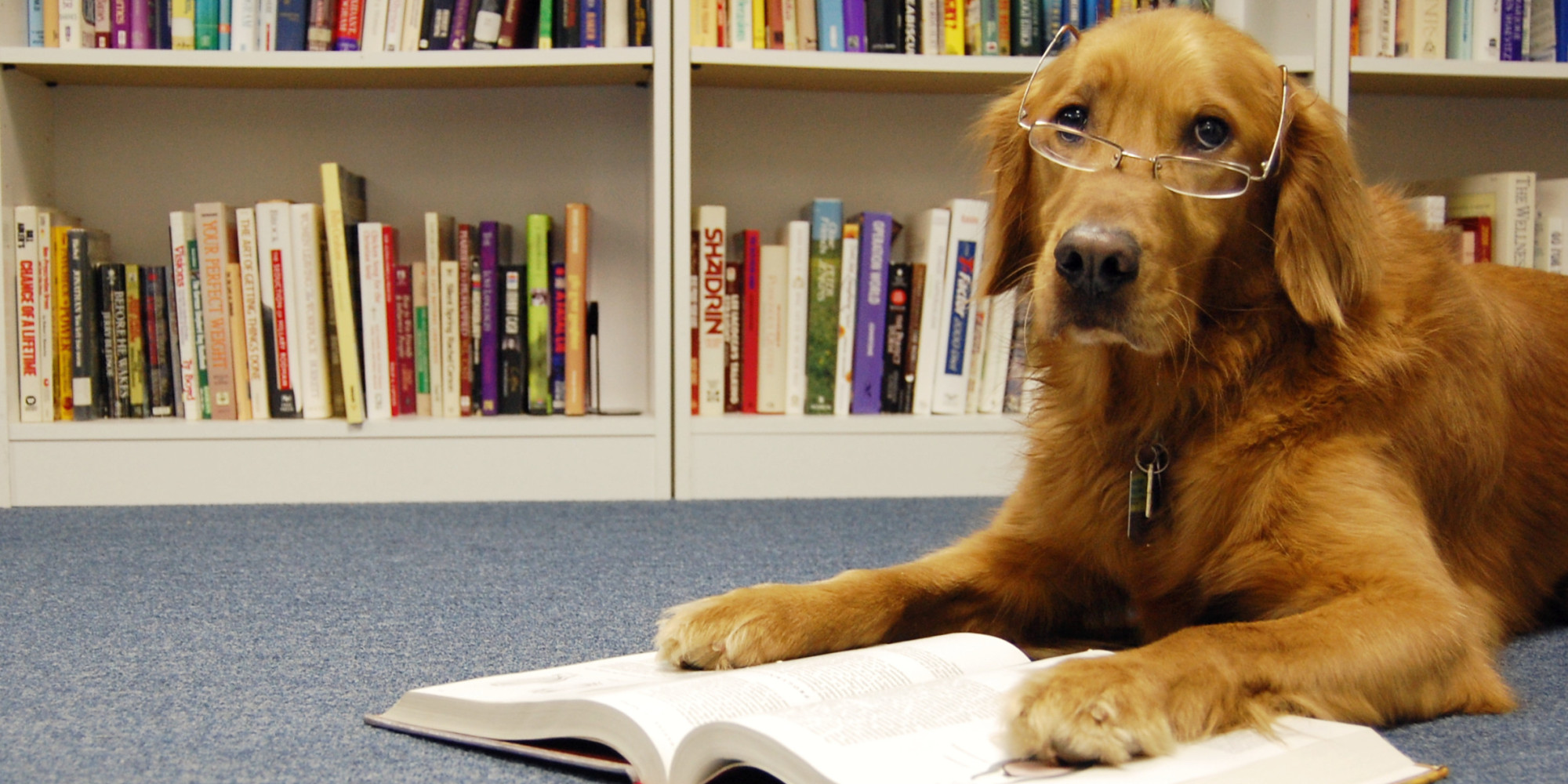 a cute dog with glass reading a book
